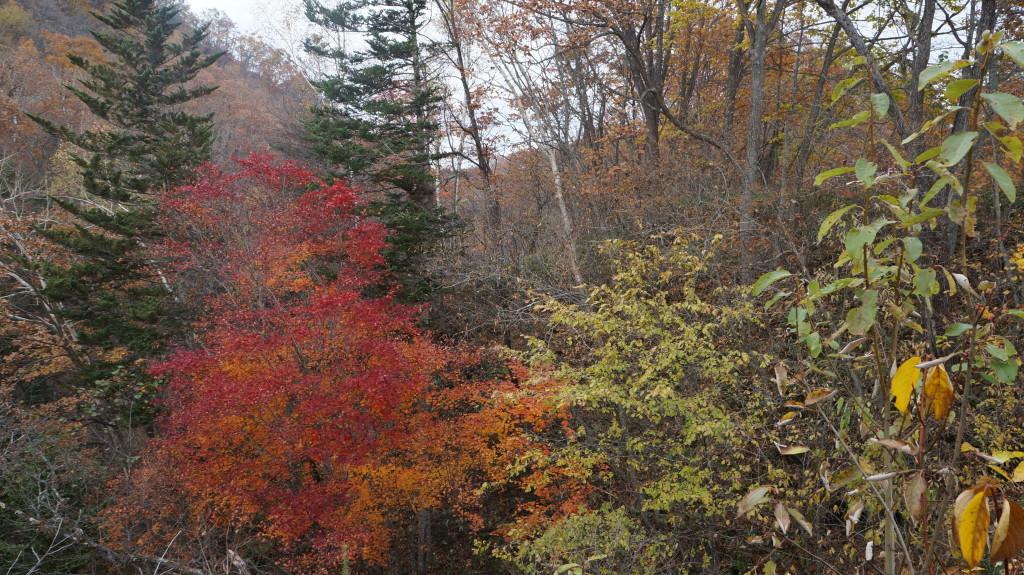 岩内仙峡 紅葉